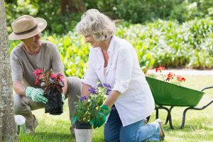 27141203 xl 300x200 - 27141203 - smiling mature couple engaged in gardening